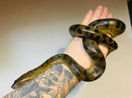 Lots of Amazing snakes WOW