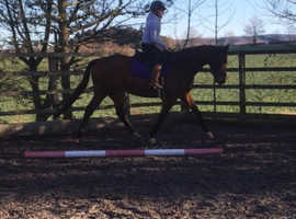 Lovely gelding for share