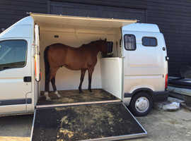 Renault Master 3.5 ton Horsebox Horse Box stalled for 2 Rear Facing