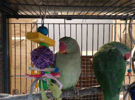 Pekin Quality Parrot and Aviary Bird Rescue