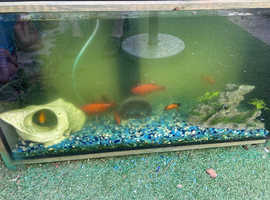 Fish Tank. Complete with 5 fancy fish. Large snails. 3 filter pumps. Ornaments