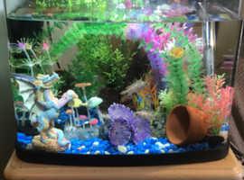 Fish tank and 3 cichlids