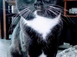 My handsome boy cat