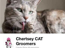 Chertsey Cat Groomers