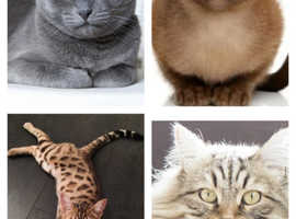 Hypoallergenic cat/kitten