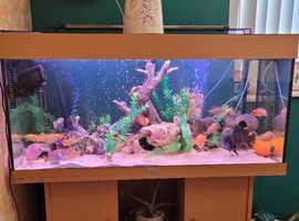 Full fish tank set up