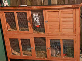Rabbits and hutch