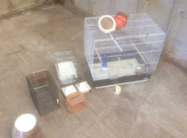 used bird items for sale