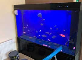 500l fish tank