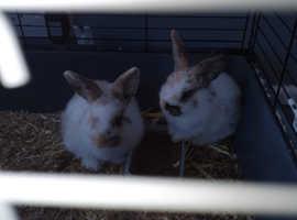 A pair of girl baby rabbits