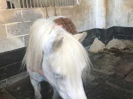 Brood mare/ field companion