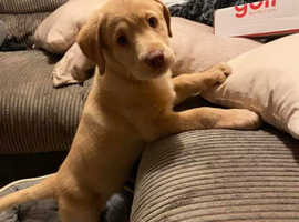Last two Rare Dudley KC registered girls assistance and Pat parents...