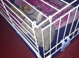 For sale male rabbit with cage