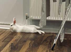 Beautiful white rabbit