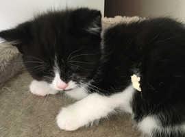Female kittens ready now