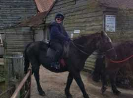 looking for a share of a pony horse for a novice rider