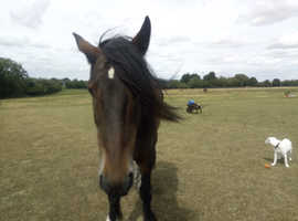 Sharer wanted for large friendly cob