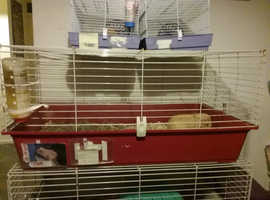 Red based Indoor Guinea pig cage