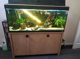 Roma 240 5ft fish tank & stand inc all fish