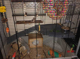 2 female rats with complete set, food and treats included.