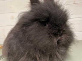 Female rabbit needing a new home