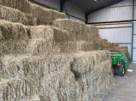 Conventional meadow hay bales