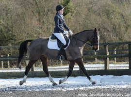 Warmblood x 2 day loan