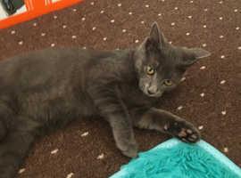 Lovely cat/kitten for sale