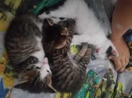 2 adorable kitty