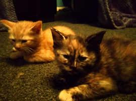 Last kittens