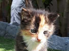 Beautiful female kitten available to reserve
