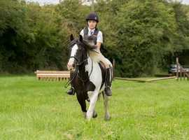 Fabulous Genuine All Rounder - Dolly 14.2 Mare 11 years old