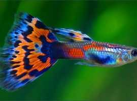 Tropical fish wanted (rehome) - Safe social distancing