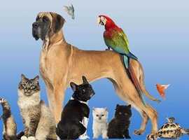 walking doggys and  pets , And Holidays care