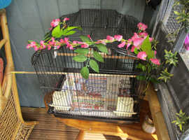 3 Baby Zebra Finches, cage, accesories, food, ready to go!