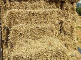 Medium hay bales for sale