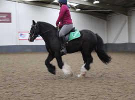 Super pony club pony