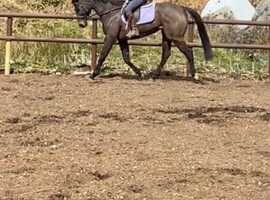 Talented allrounder/eventer in the making