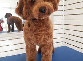 Professional Dog Grooming. Holytown