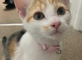 18 week old kitten for sale!!
