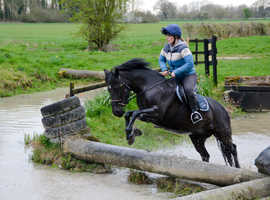 14hh FUN ALL ROUNDER