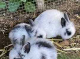 Various rabbits boys/girls babies and 1 year olds