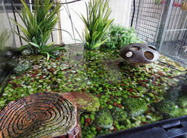 Fire-Bellied Toads with Tank, Lights and Pump/Filter