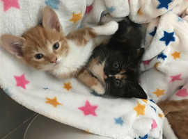 Kittens , ready  all colors