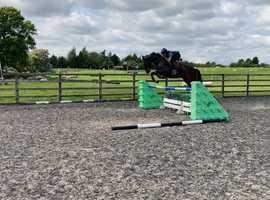 Super fun little horse