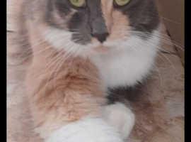 Lost Cat Named Novah