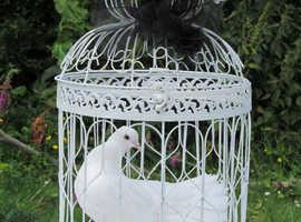 Dove release for funerals & memorials.