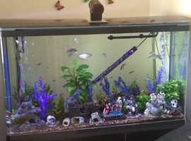 Full set up aquarium nice set up