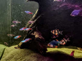 Collection of fish for sale