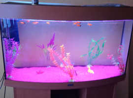 Beautiful fish tank set up and 14 fish